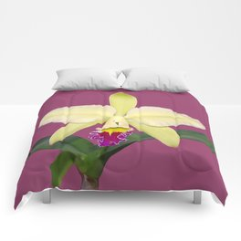 Stunning cream and magenta orchid flower Comforters