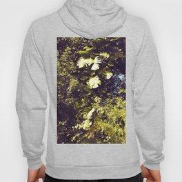 Tropical Tree - Original Hoody