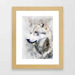 Watercolour grey wolf portrait Framed Art Print