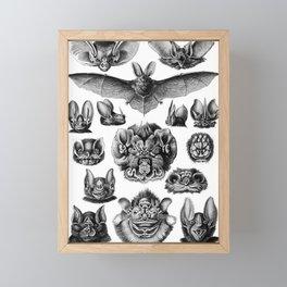 Ernst Haeckel Bats Framed Mini Art Print