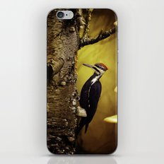 Pileated Woodpecker Forest Sunrise iPhone & iPod Skin