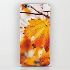Autumn 24431 iPhone & iPod Skin