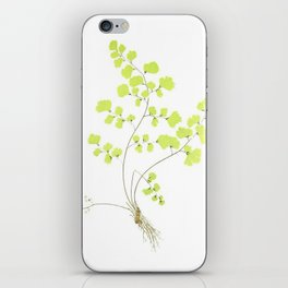 Maidenhair Fern iPhone Skin