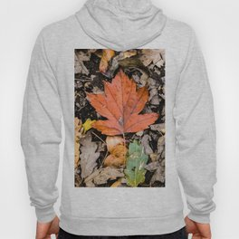 Autumnal leaves on the ground Hoody