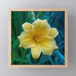 Yellow Day Lily on Green Blue Background Framed Mini Art Print