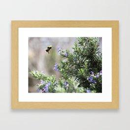 bumble bee flight Framed Art Print