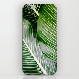 Big Leaves - Tropical Nature Photography iPhone Skin