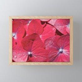 Hydrangea closeup Framed Mini Art Print