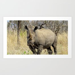 Black Rhino Art Print