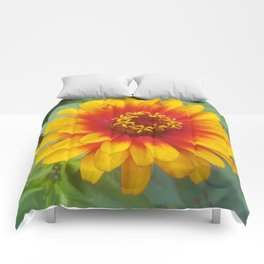 Zinnia on fire Comforters