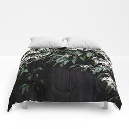 Clematis Armandii Comforters