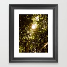 Summershine Framed Art Print