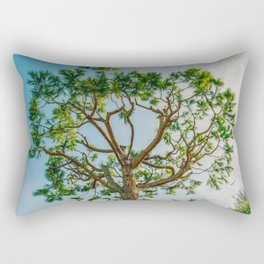 Maritime pine in French Riviera in a sunny winter day Rectangular Pillow