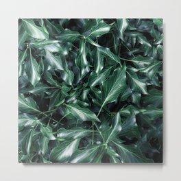 Ivy 01 Metal Print