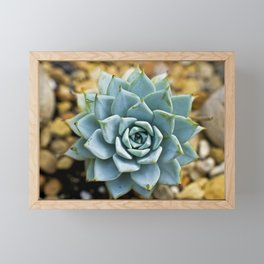 Succulent Framed Mini Art Print