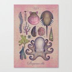 Aequoreus vita V / Marine life V Canvas Print