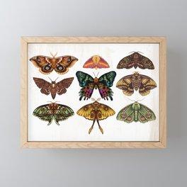 Moth Wings III Framed Mini Art Print