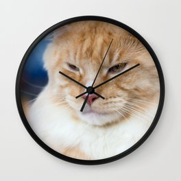 Red-white tabby Maine Coon cat Wall Clock