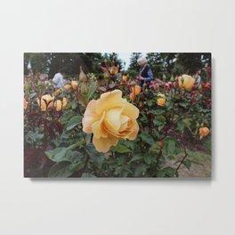A Walk Through the Rose Garden Metal Print