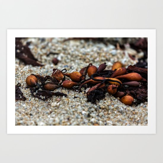 Kelp on beach Art Print