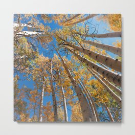 Aspen Trees Against The Sky In Crested Butte, Colorado for #Society6 Metal Print