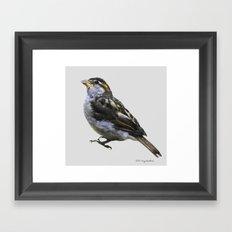 Sweet Little Sparrow Framed Art Print