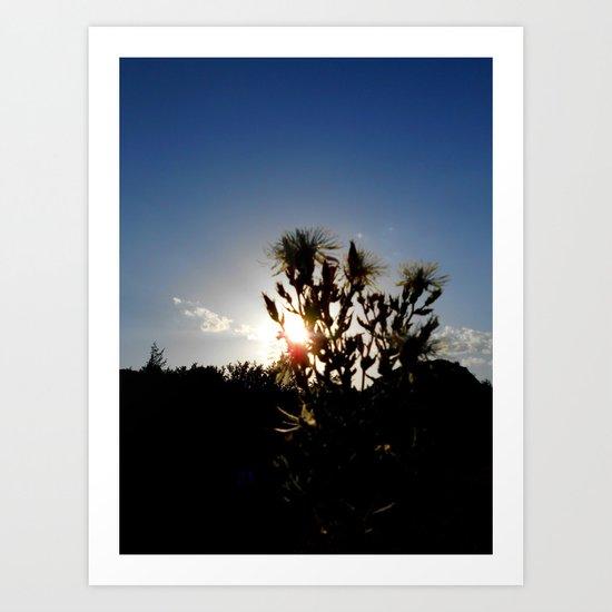 Sand Lilly Sunset Art Print