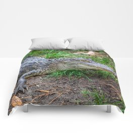 Alligator - Hello Darlin' Comforters