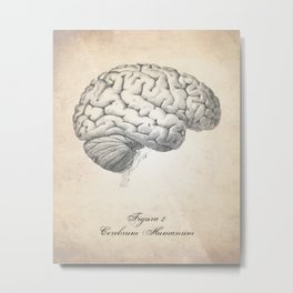 Human Brain Human Anatomy Art Metal Print