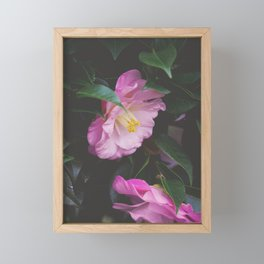 Moody Pink Camellia Framed Mini Art Print