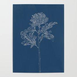 Chrysanthemum Blueprint Poster