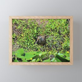 The Limpkin II Framed Mini Art Print