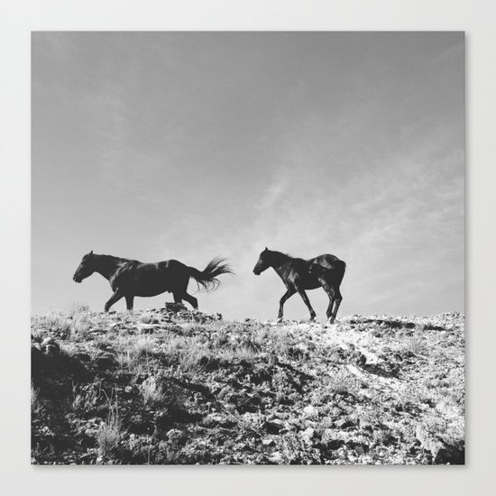 Pryor Mountain Wild Mustangs Canvas Print