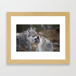 Wolf Love  Framed Art Print