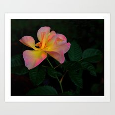 Autumn Rose 2 Art Print
