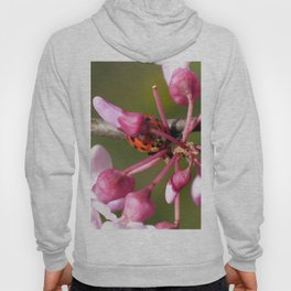 Flowering Redbud with Ladybug Hoody