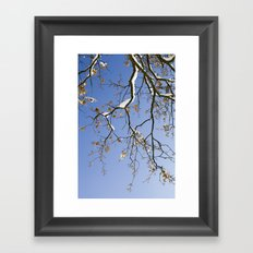 Snowy Branch Framed Art Print