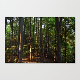 Forest // Sunset Effect Canvas Print