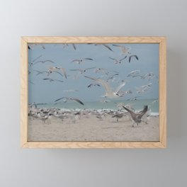 Gulls Framed Mini Art Print
