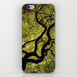 Japanese Maple Tree iPhone Skin