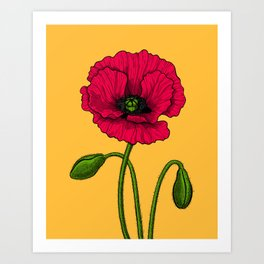 Red poppy drawing Art Print