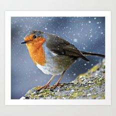 Snowy Robin Art Print
