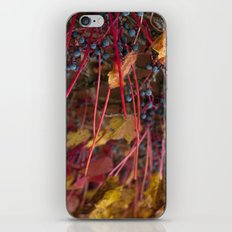 Berries and Leaves iPhone & iPod Skin