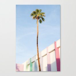 Palm at the Saguaro Canvas Print