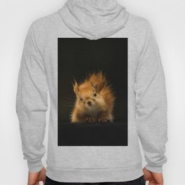 Starring Squirrel Hoody