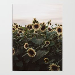 In The Sunflower Field Poster