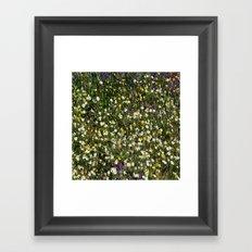 nature Florins Framed Art Print