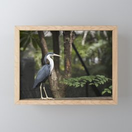 Pied Egret Framed Mini Art Print