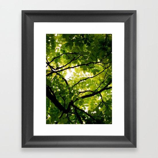 Robinia Framed Art Print