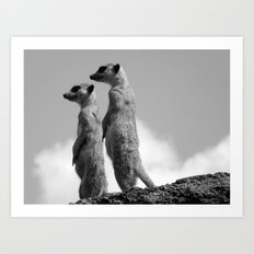 Meerkats, Fuerteventura. Art Print